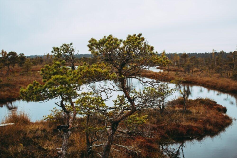 Juoņs Pīnups – pādejais Latgolys mežabruoļs