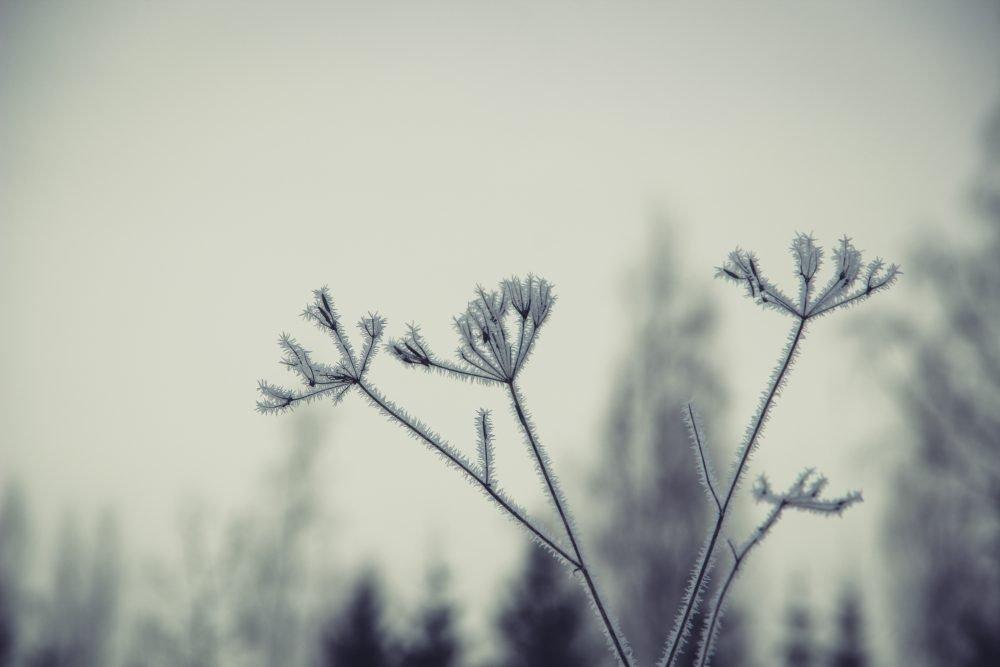 10 dzīsmis latgaliski ap snīgu i Zīmyssvātkim